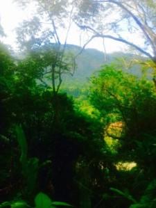 Imperial Jardim Botânico do Rio de Janeiro