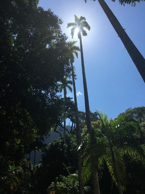 IMG_2210PARQUE LAGE RIO DE JANEIRO